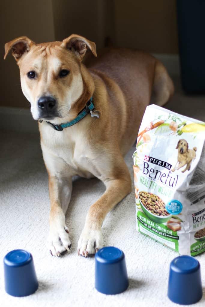 Meet Tucker: My Sous Chef!