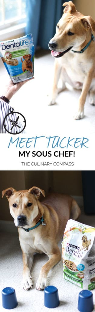 Meet Tucker, my sous chef! I love feeding him Purina DentaLife treats and playing games to keep him healthy! #ad